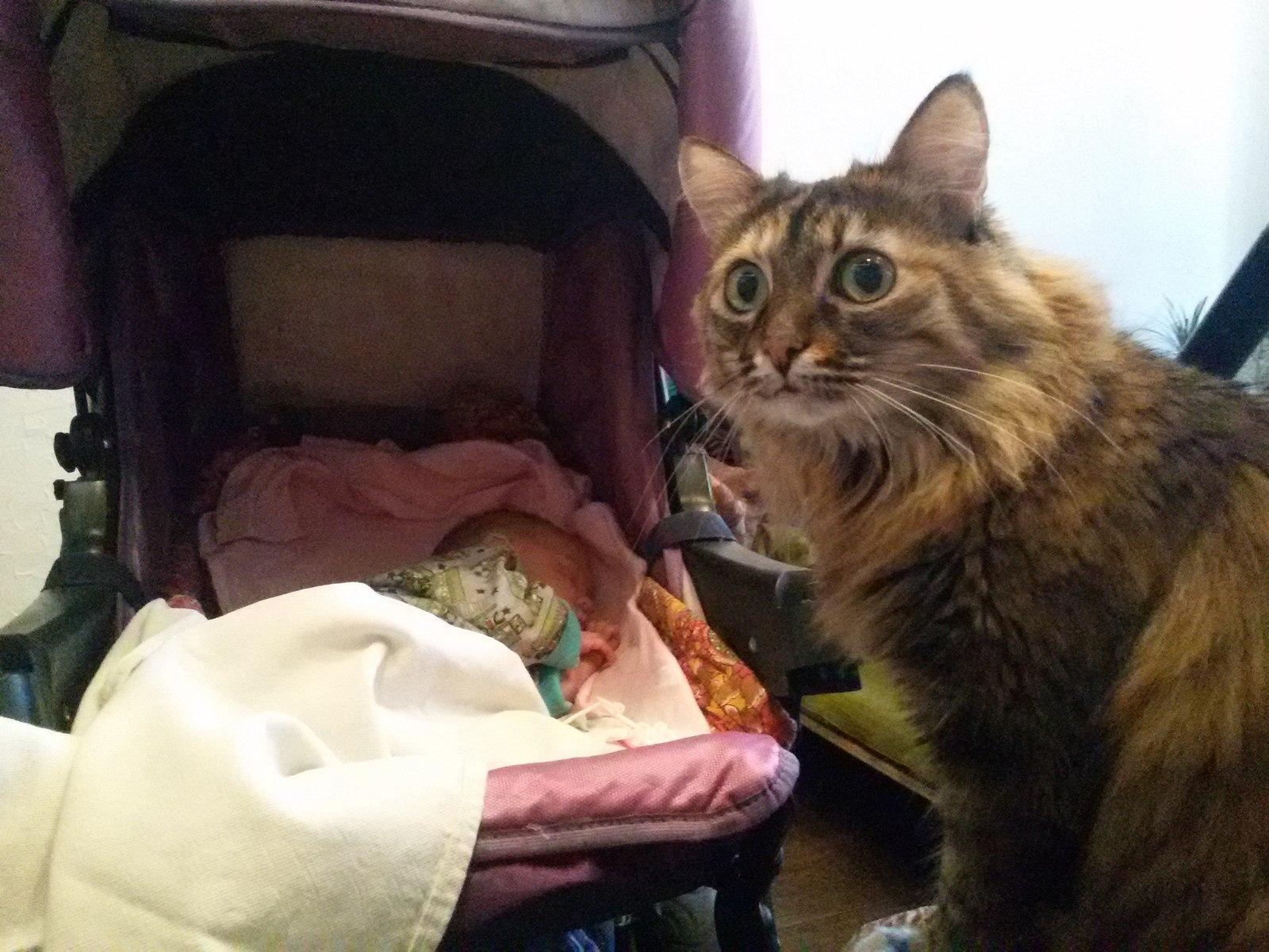 Реклама кота с ребенком