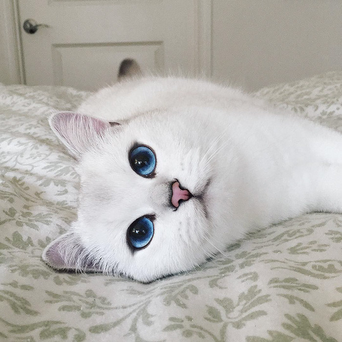 картинки с красивыми глазами кошки