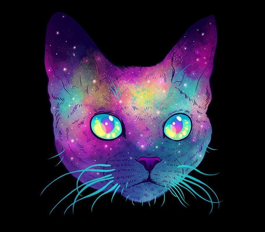 Картинка кот и космос
