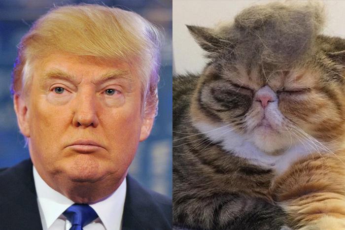 Коты трамп