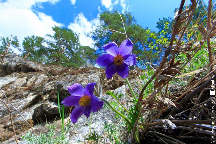 весна пришла весна картинки