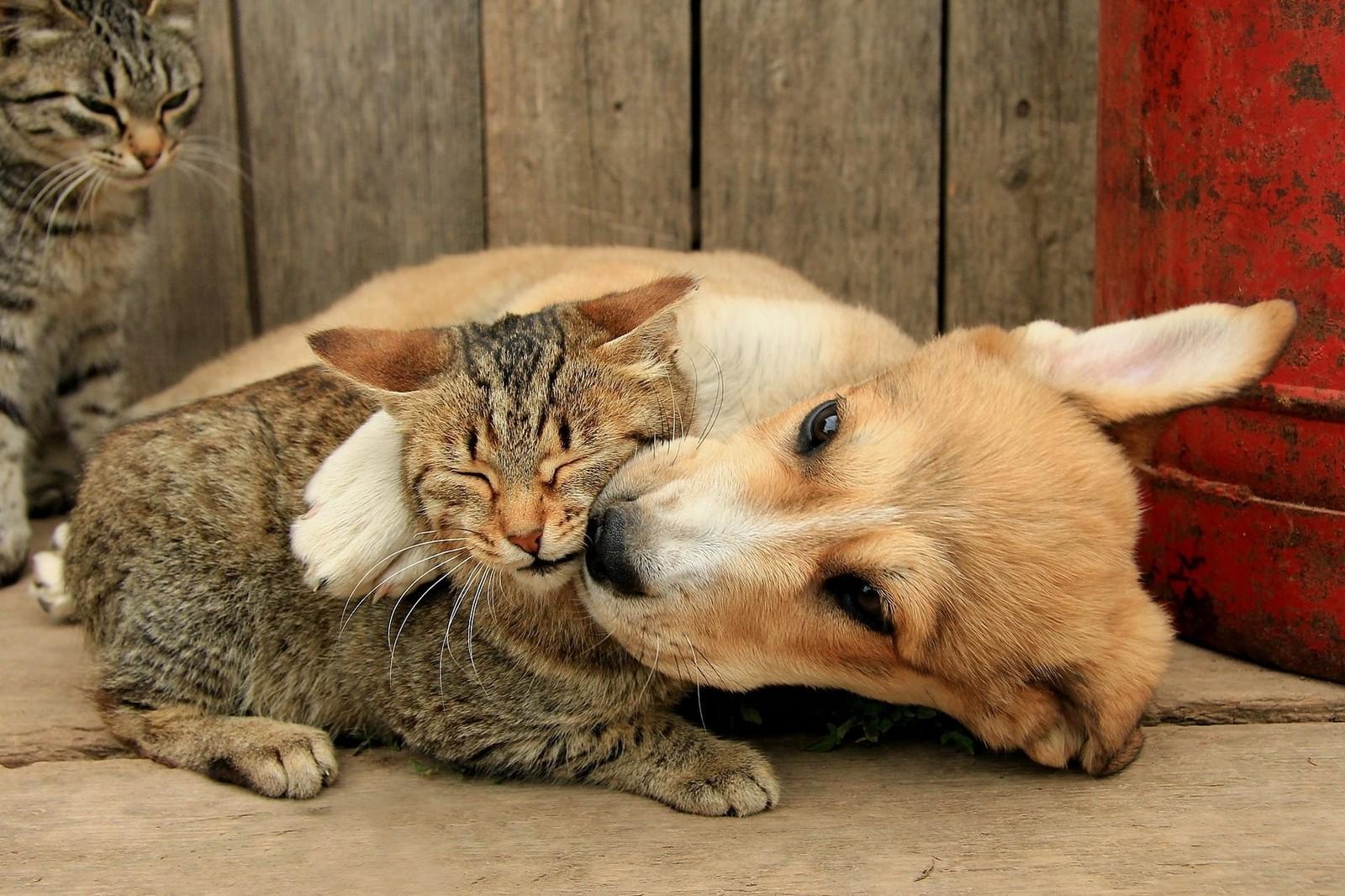 Хочу завести собаку но уже есть кот