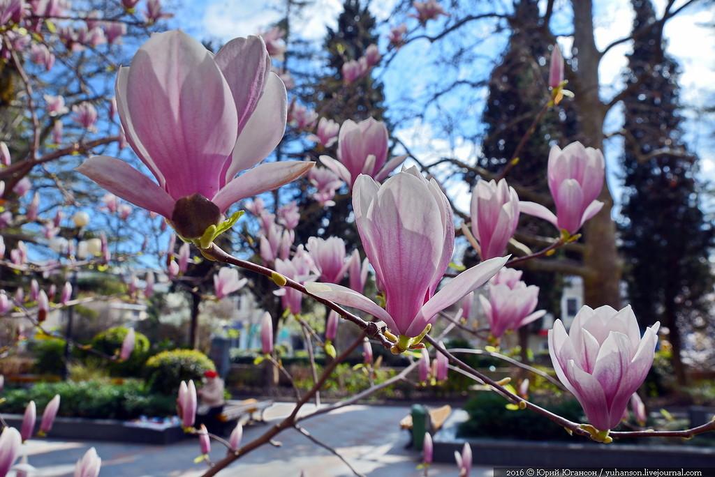 Ялта цветы