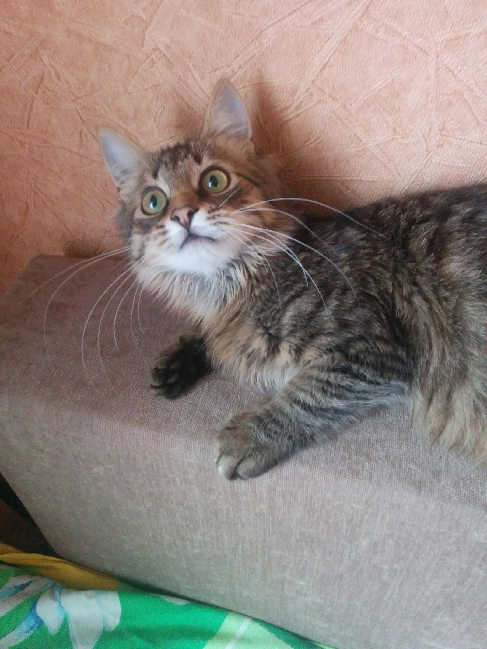 Почему кота зовут кот