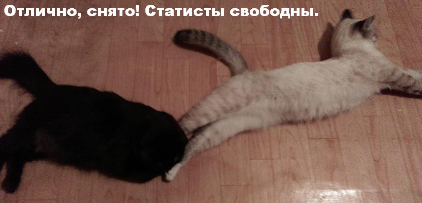 Какая у котов жопа