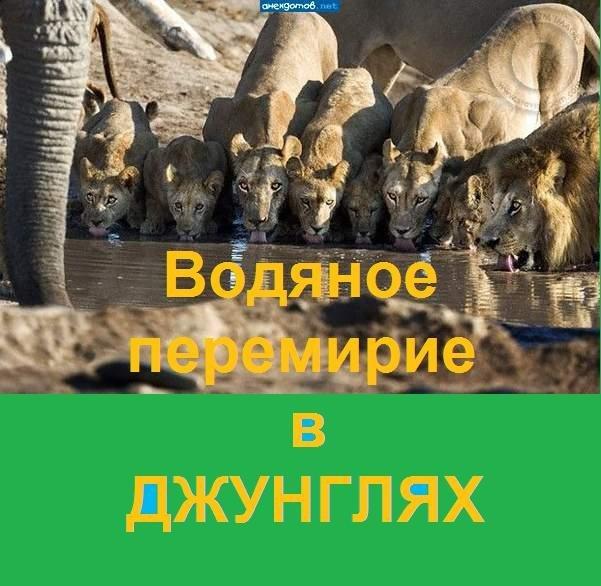 """На Донбасі почалося """"шкільне перемир'я"""" - Цензор.НЕТ 874"""