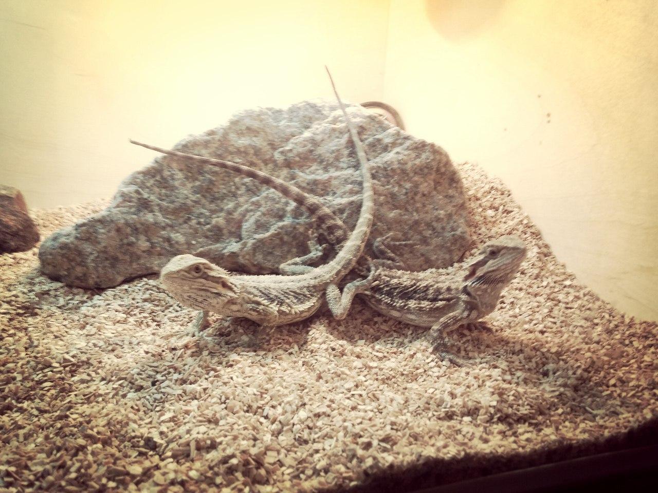 Террариум для ящерицы своими руками фото 153