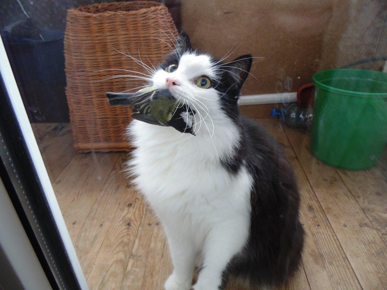 Кот съел птичку
