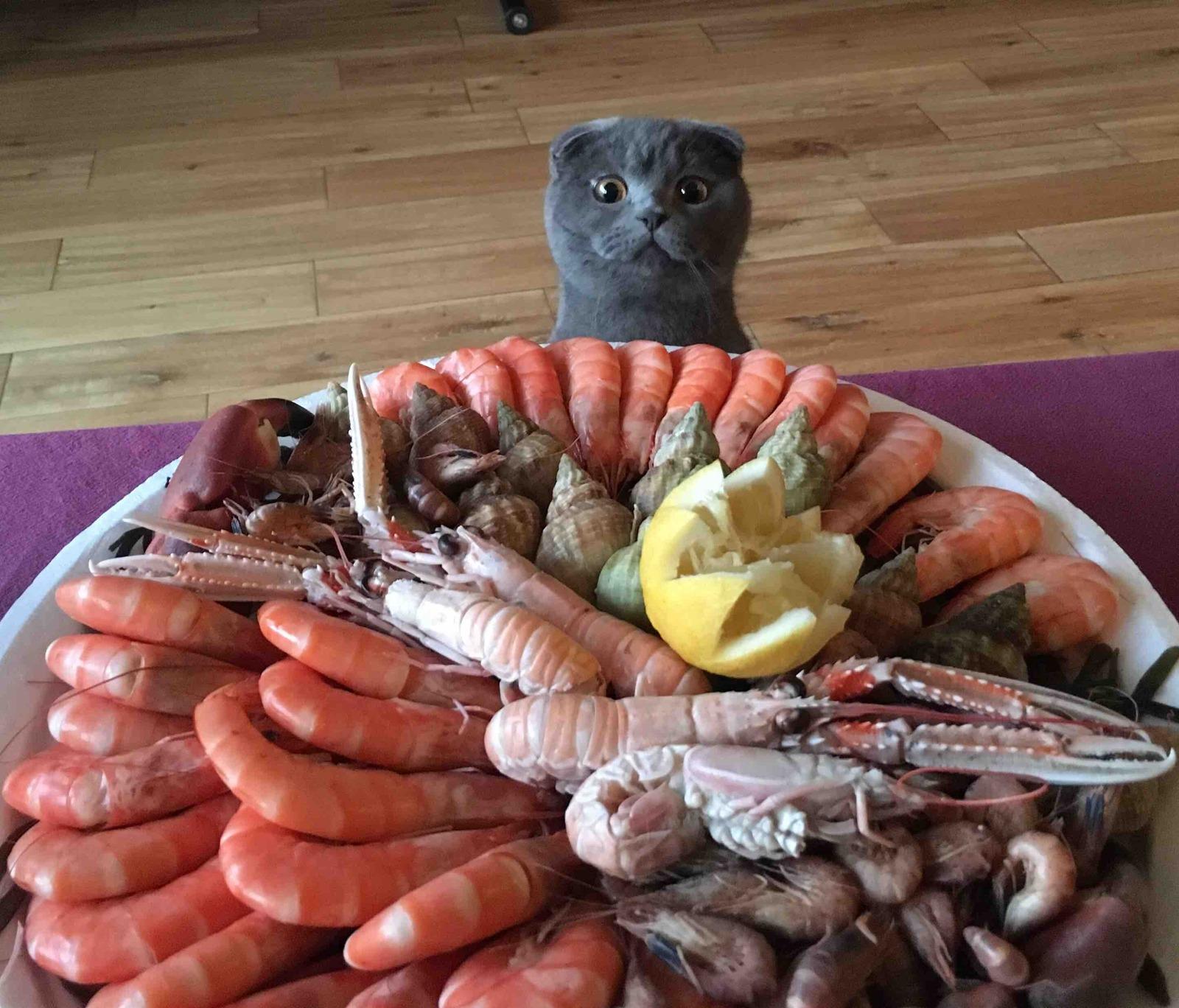 Креветки можно коту