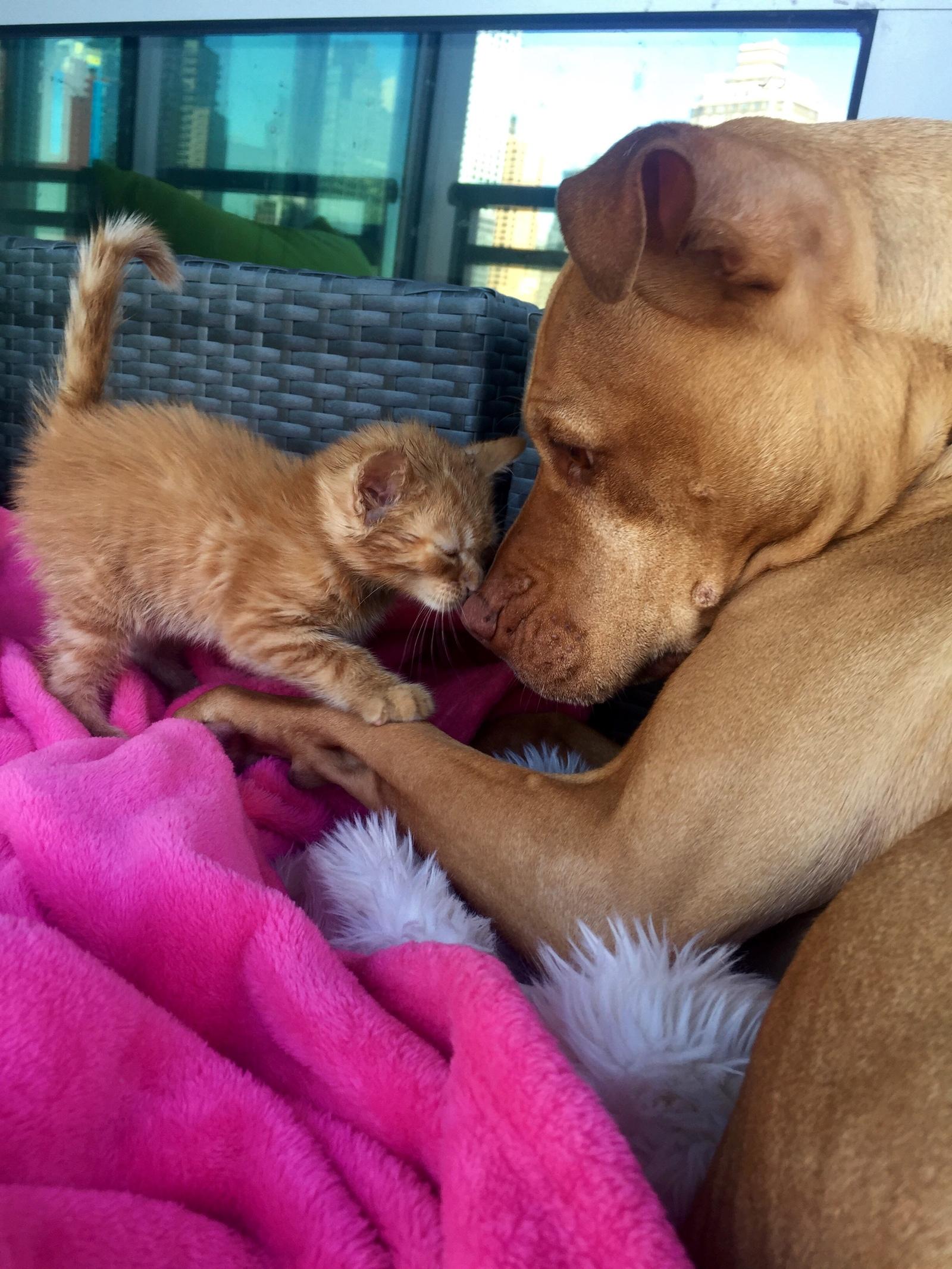 Кот и большая собака
