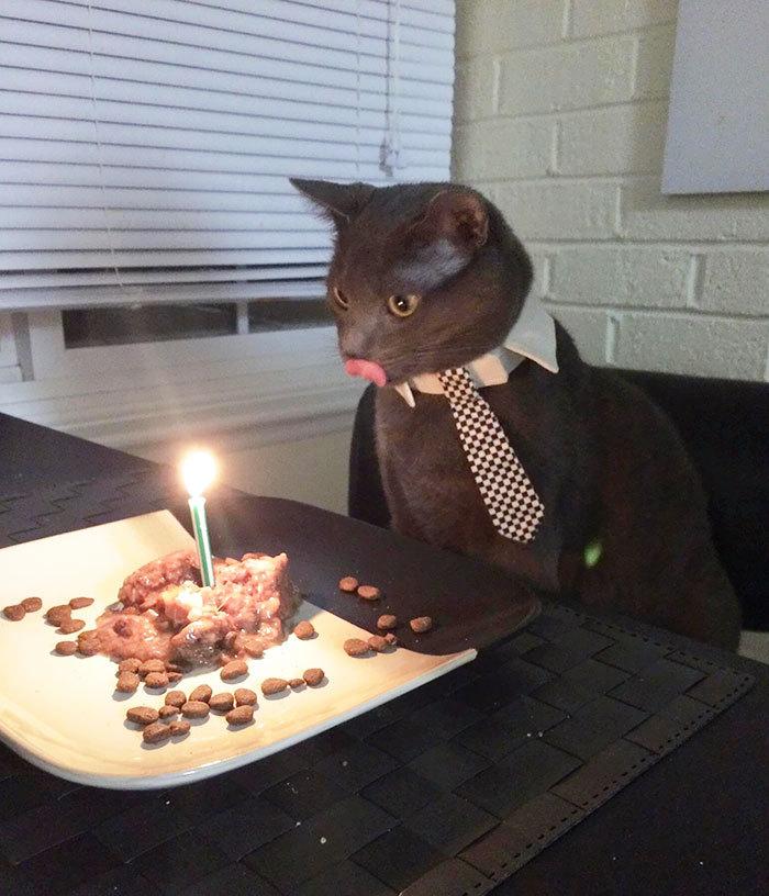 Коты отмечают день рождения