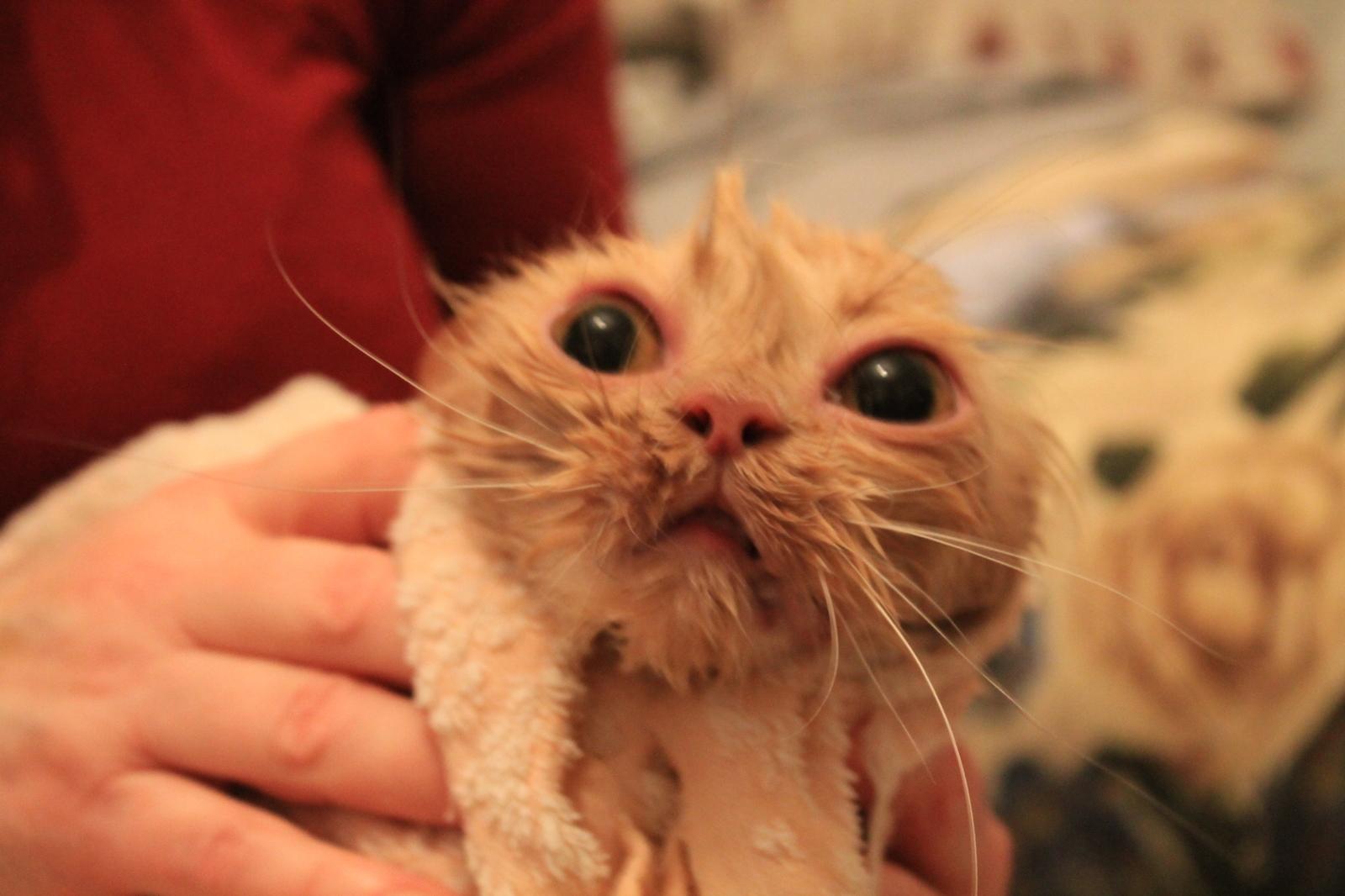 Реклама купание кота яндекс тереториальное агенство сзао камитет рекламы