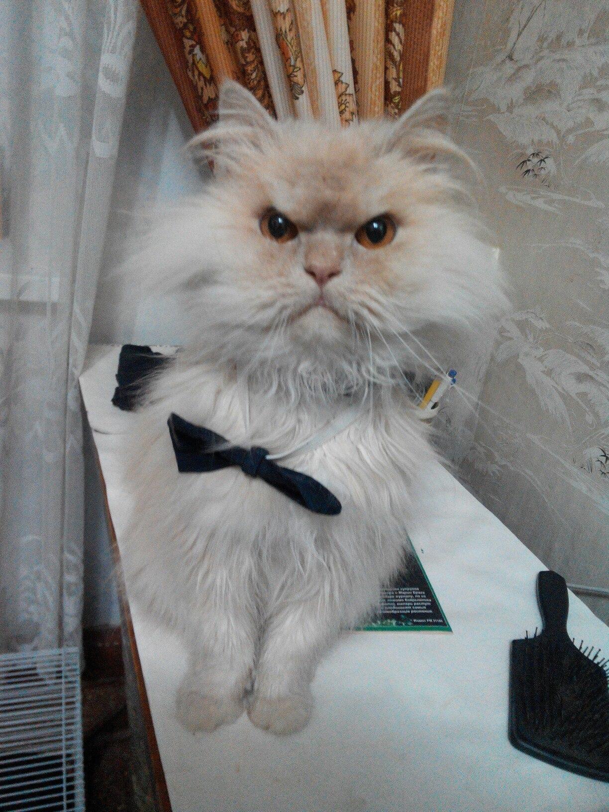 Почему кот такой злой
