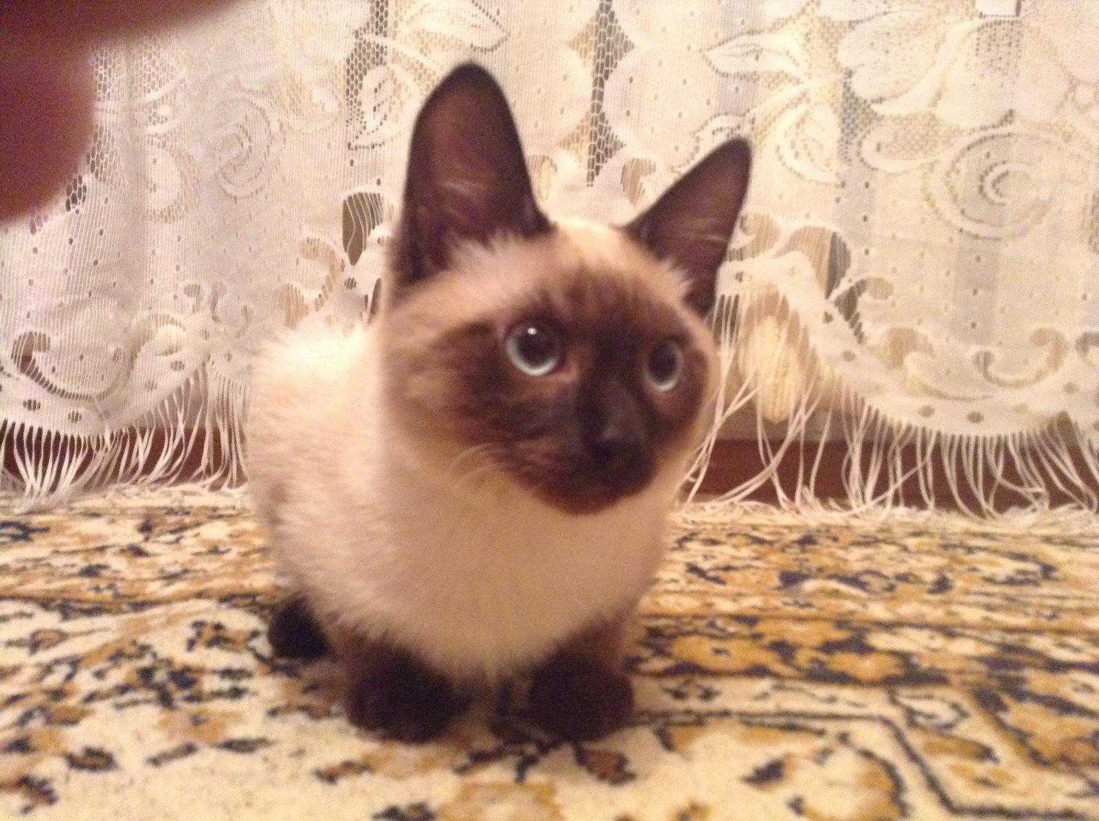 Имена для котов россия