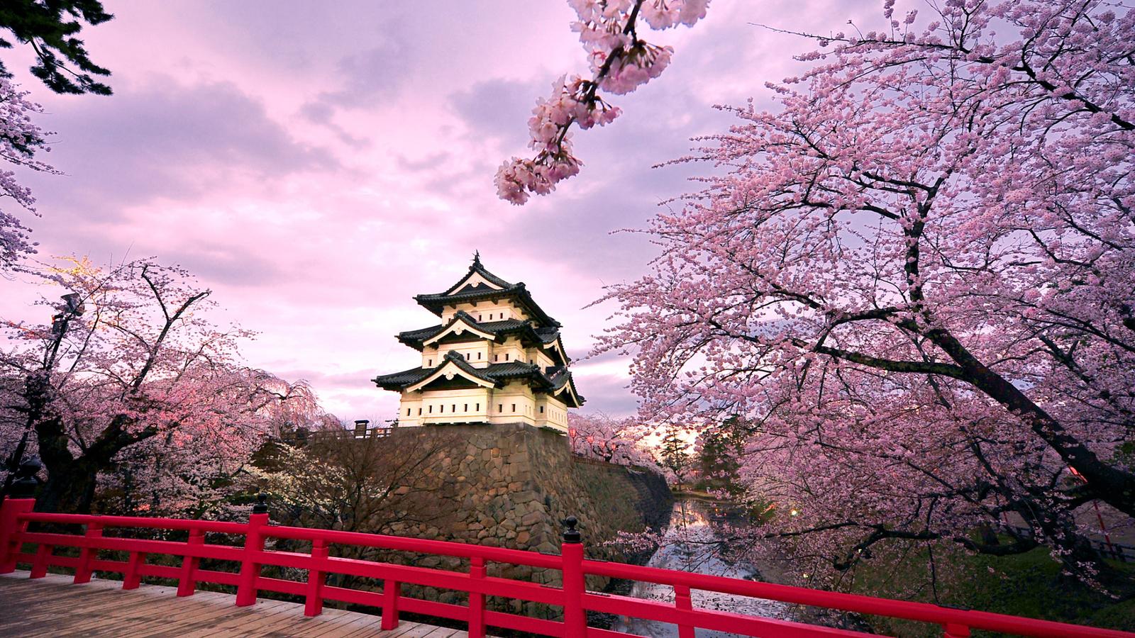 япония картинки сакура