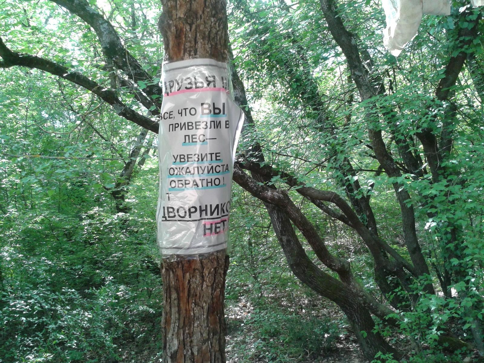 Фото секса в лес фото 99-948