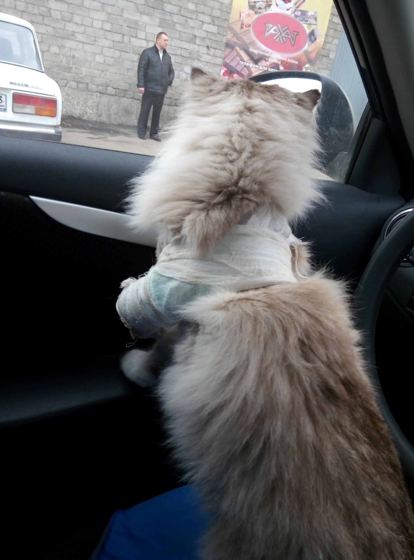 Снять гипс с кота