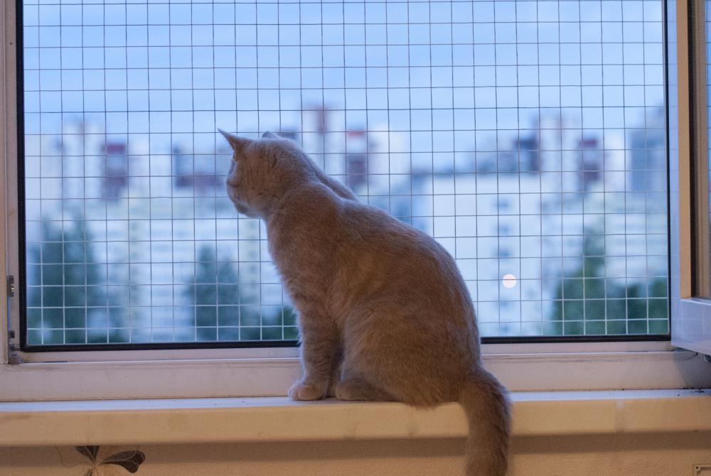 Кот выпал из окна с сеткой