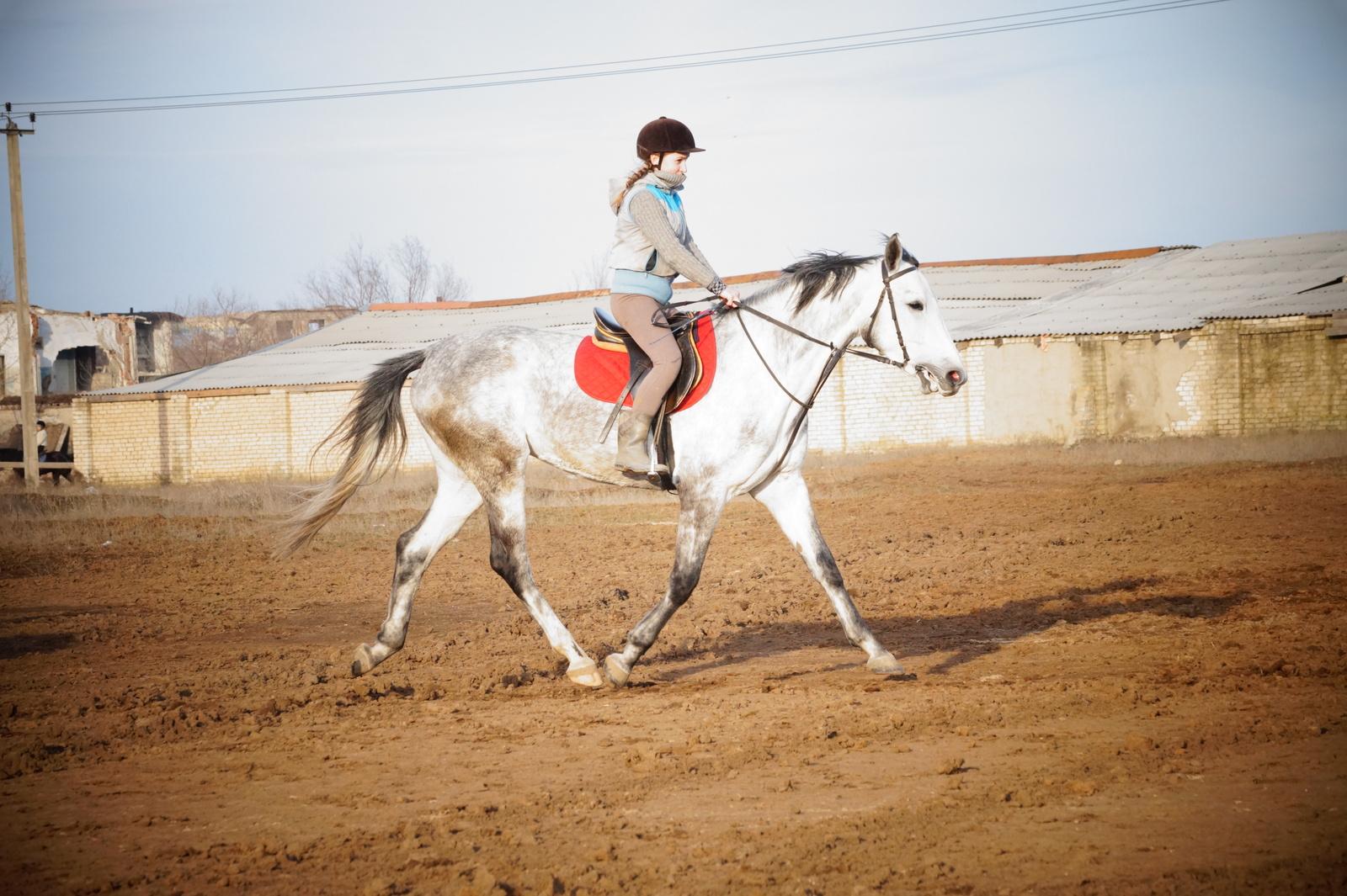Как девушки ебуца с лошадьми