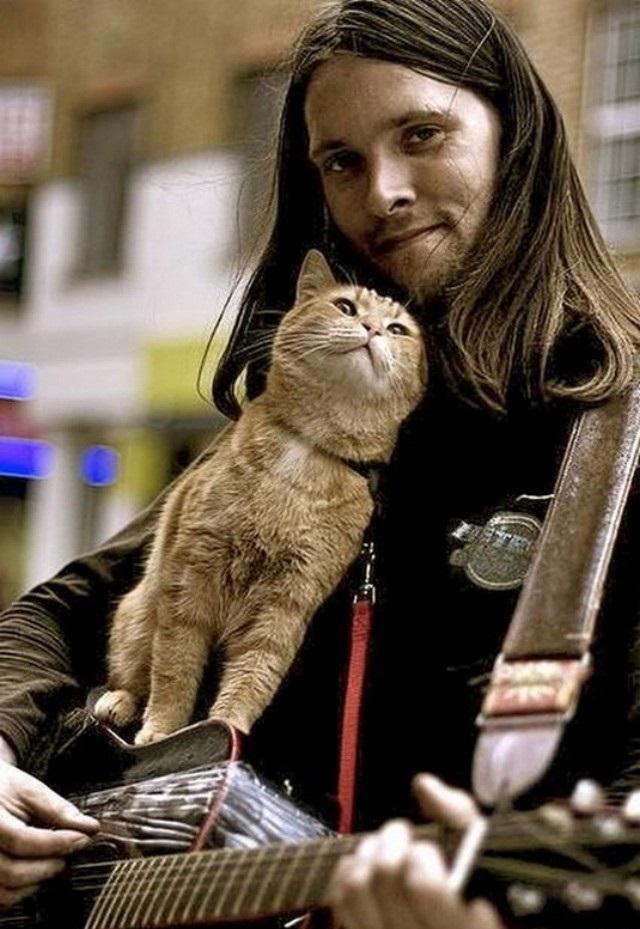 Уличный кот видео