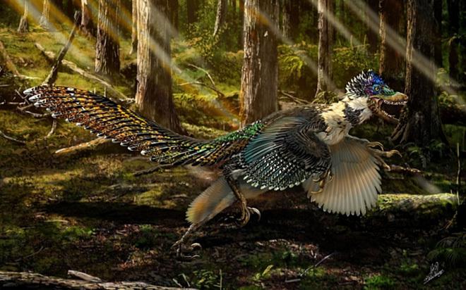 Картинки по запросу Перья динозавров