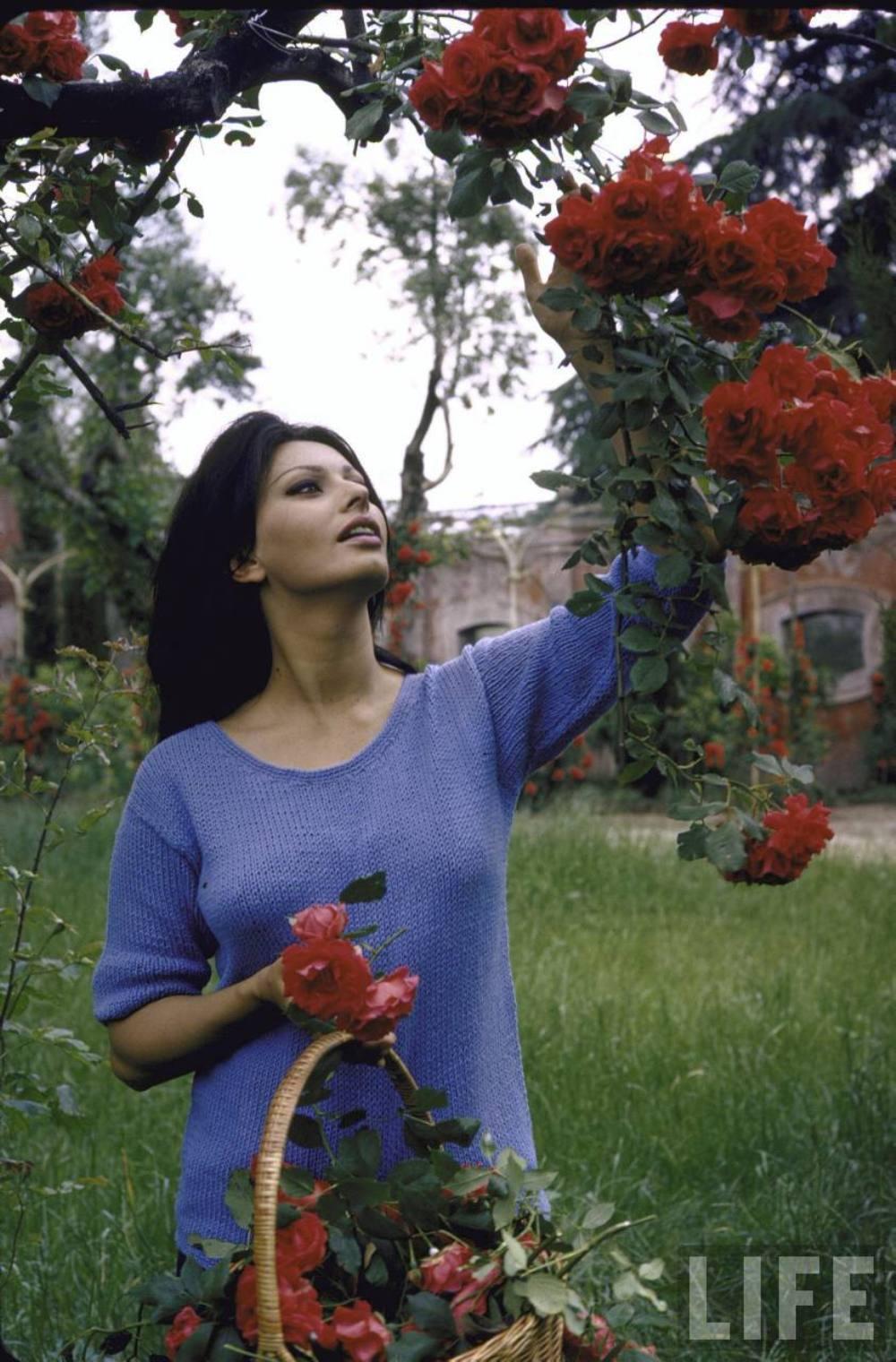 Картинки по запросу журнала Life редкие снимки софи лорен