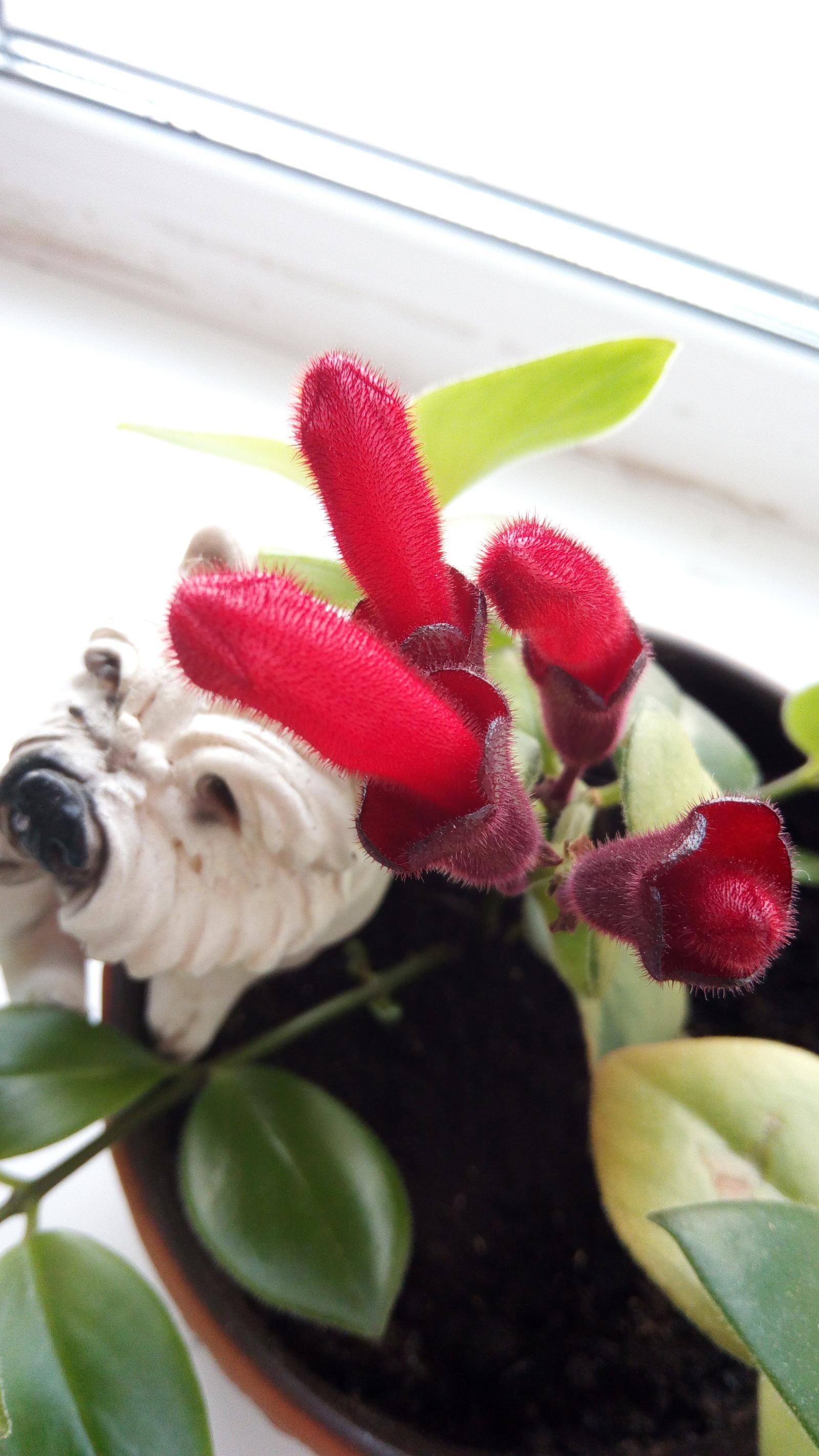Вагина со цветком