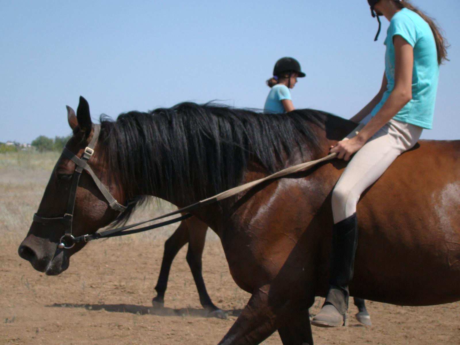езда на лошади и простатит