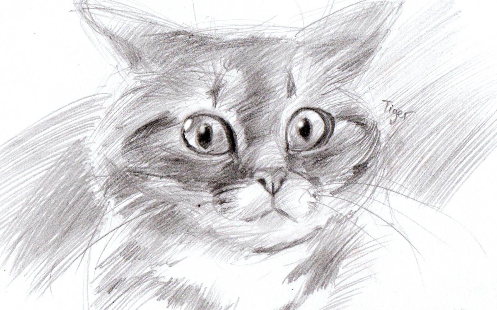 Картинки животных красивые нарисованные карандашом 15
