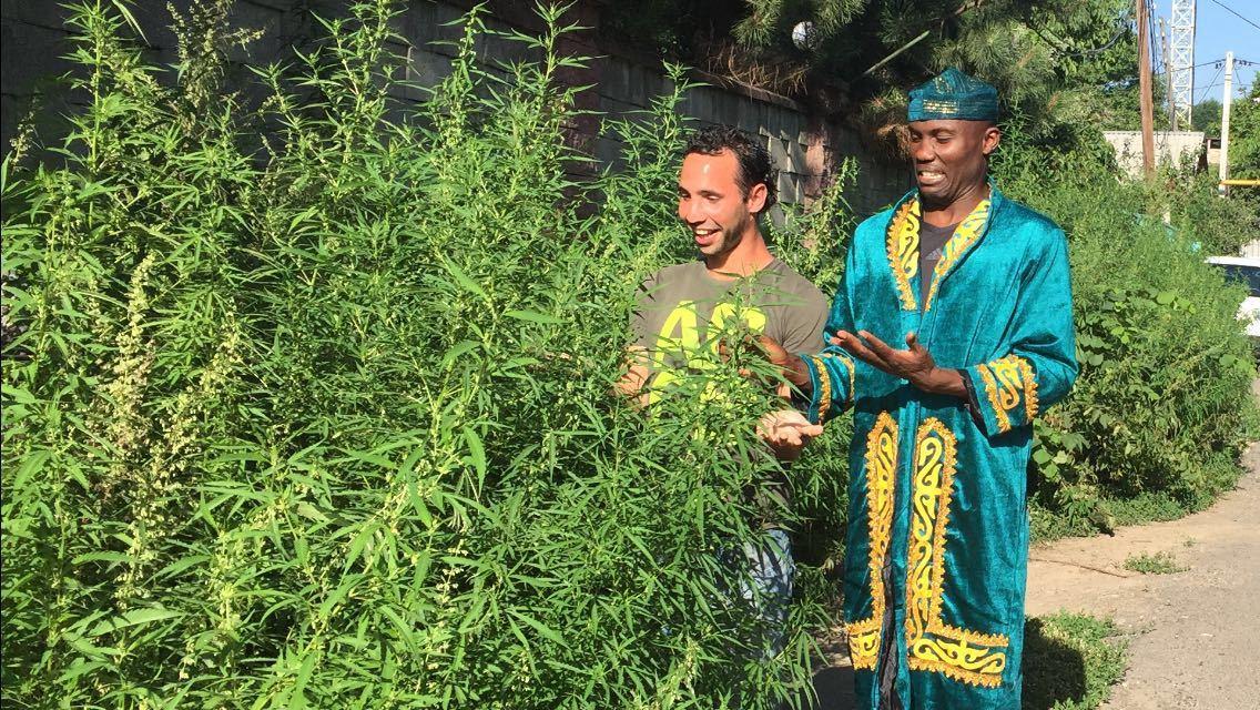 Узбеков конопля у приобрести марихуану где