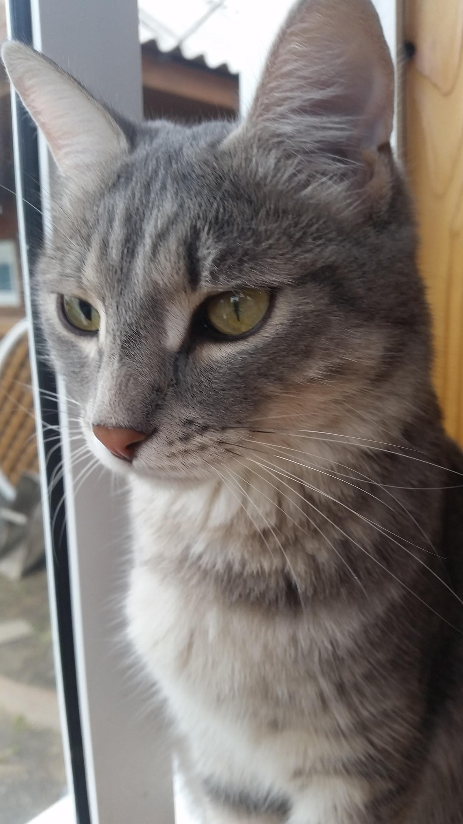 Почему у кота разного размера зрачки