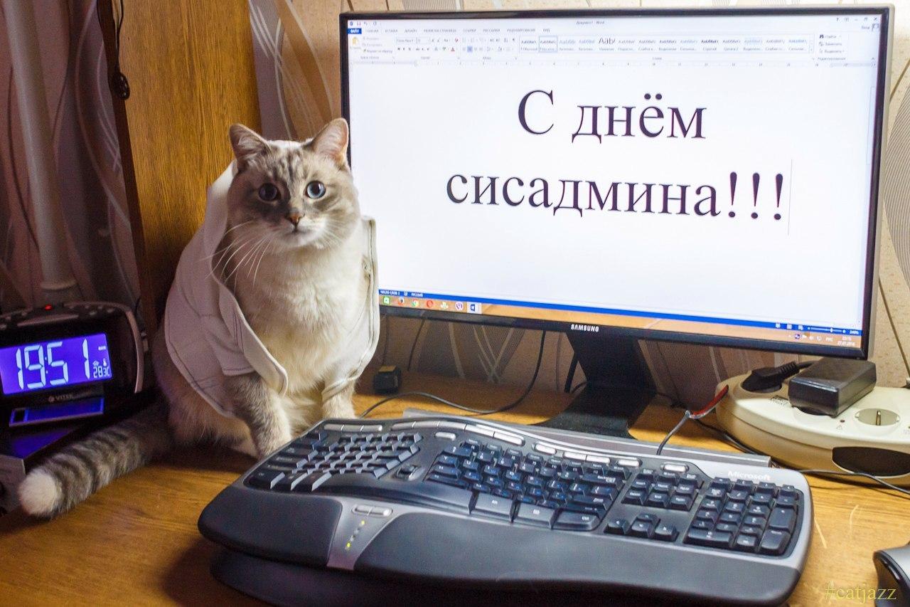 Коты и админы