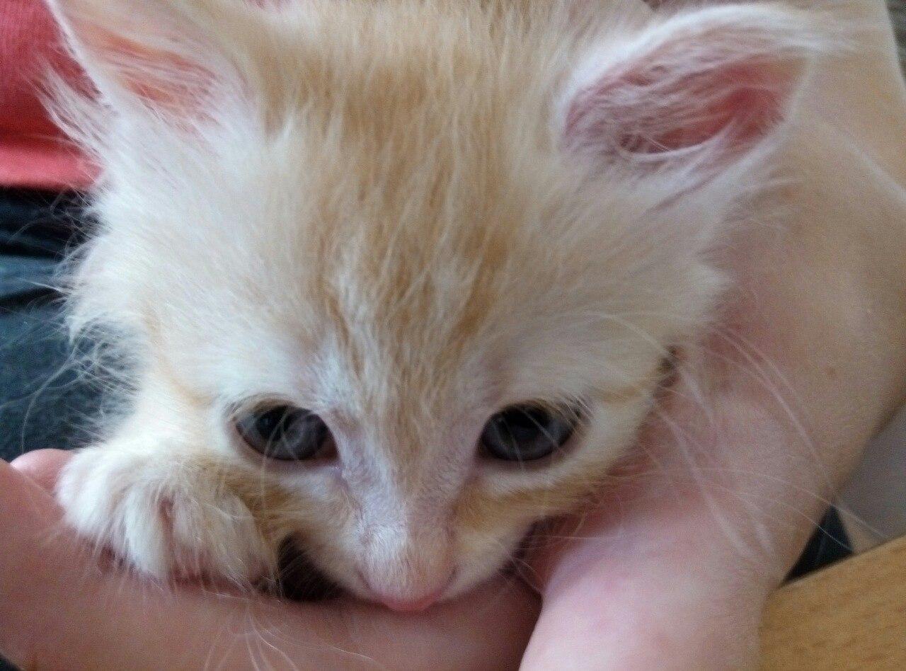 Как колоть котенку физраствор