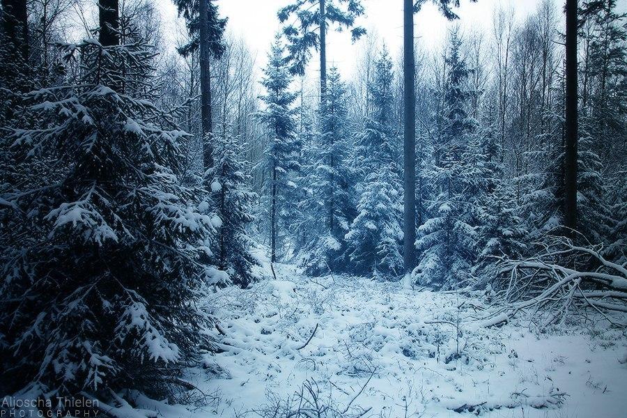 зима лес фото