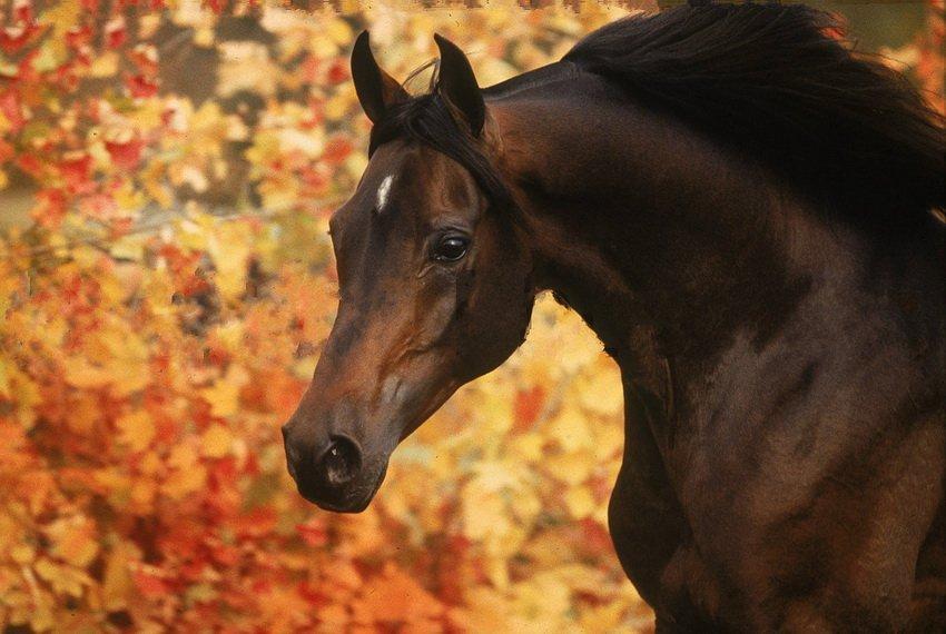фото осень и лошади