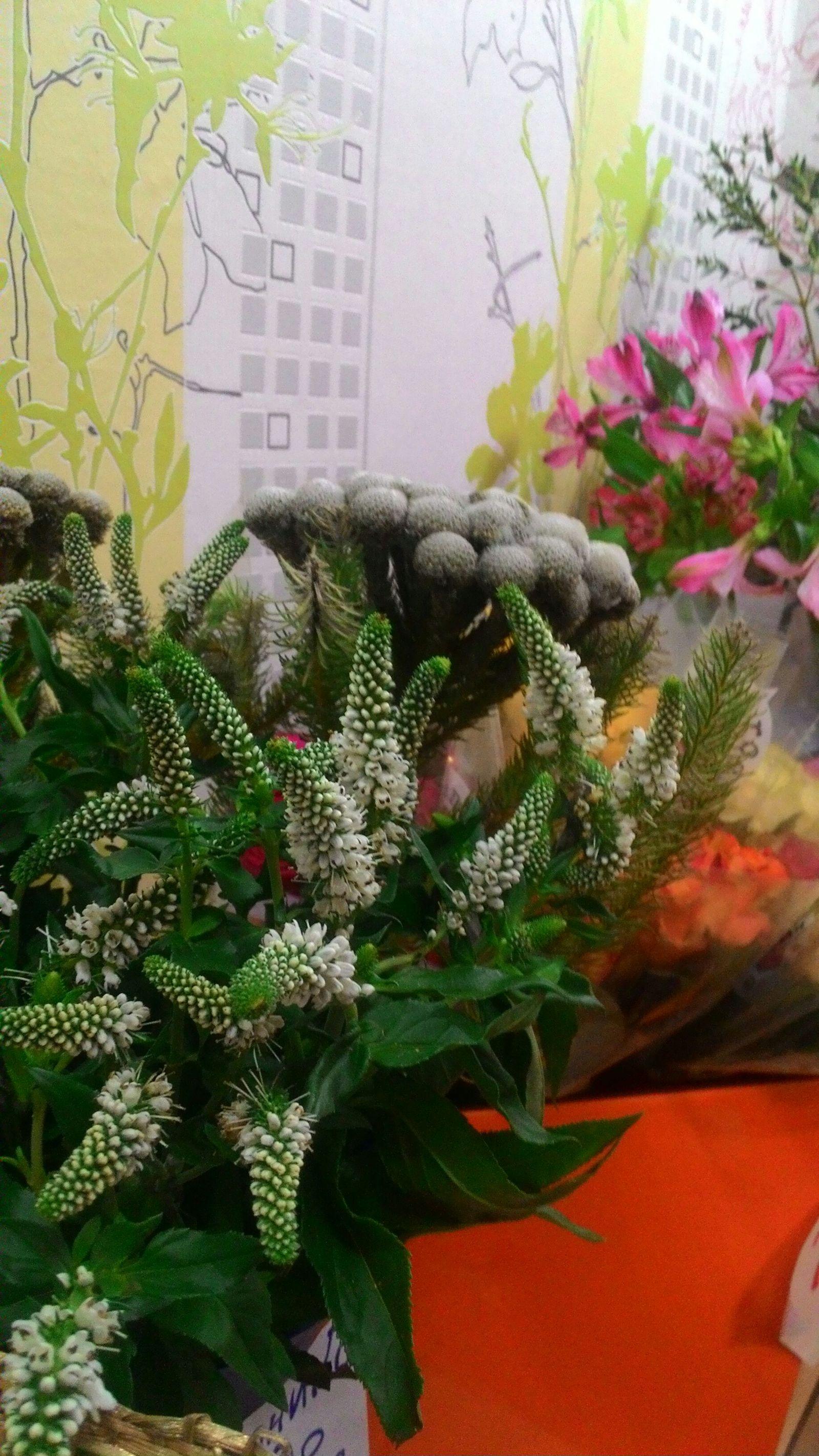 Как купить хорошие цветы доставка цветов ноябрьск недорого