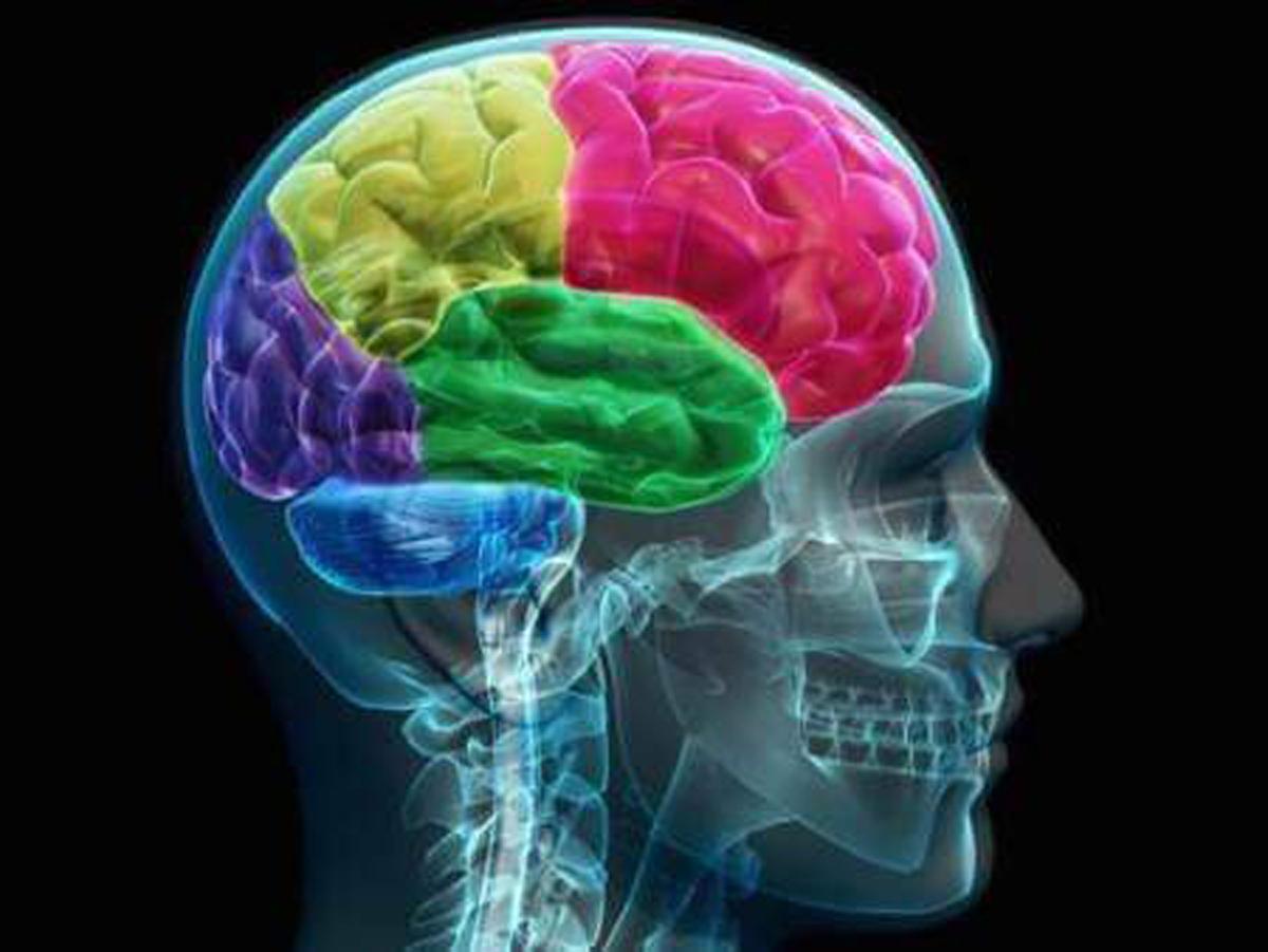 Я — нейробиолог. Вот 5 важных фактов о мозге, о которых я узнал за 30 лет работы новые фото