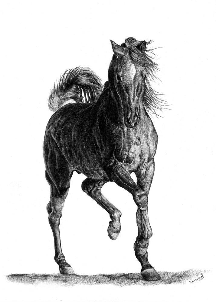 лошади рисунки фото