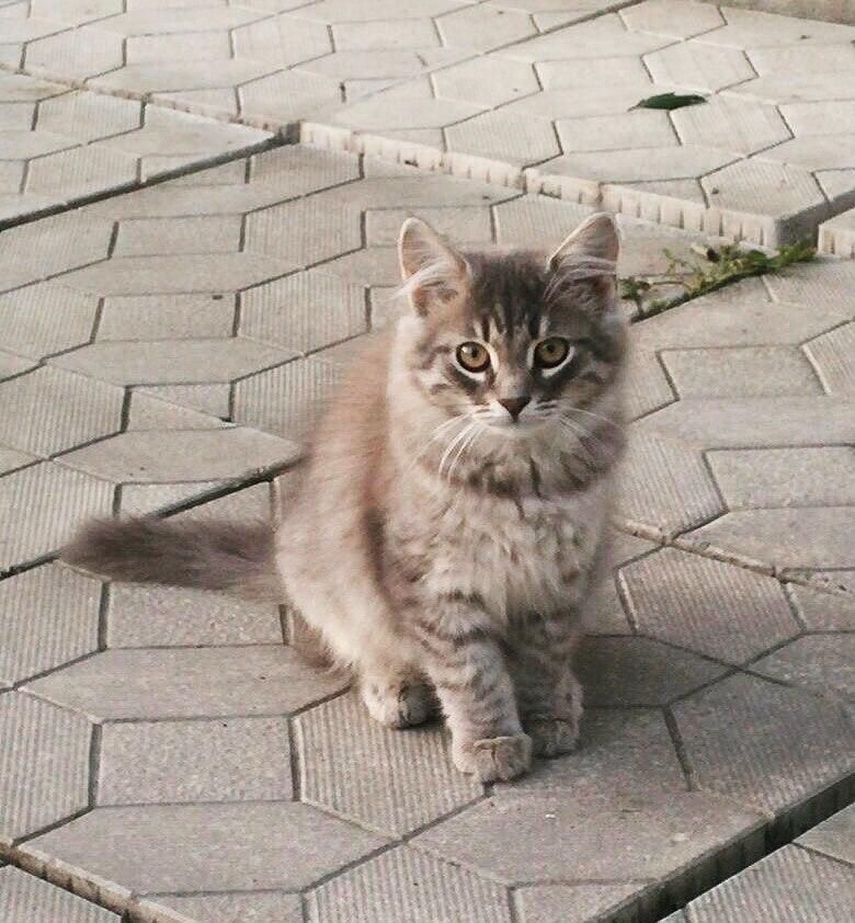Объявление отдам котенка в хорошие руки санкт петербург недвижимость в витебске частные объявления