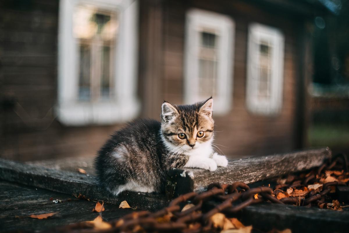 Котоосень
