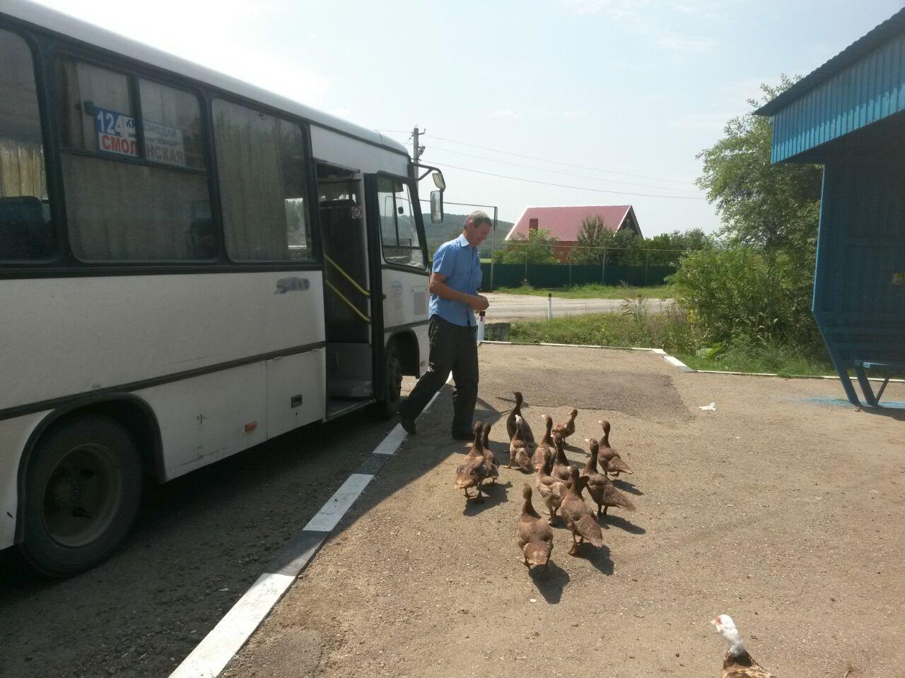 Секс в деревенском автобусе с водителем история фото 550-490