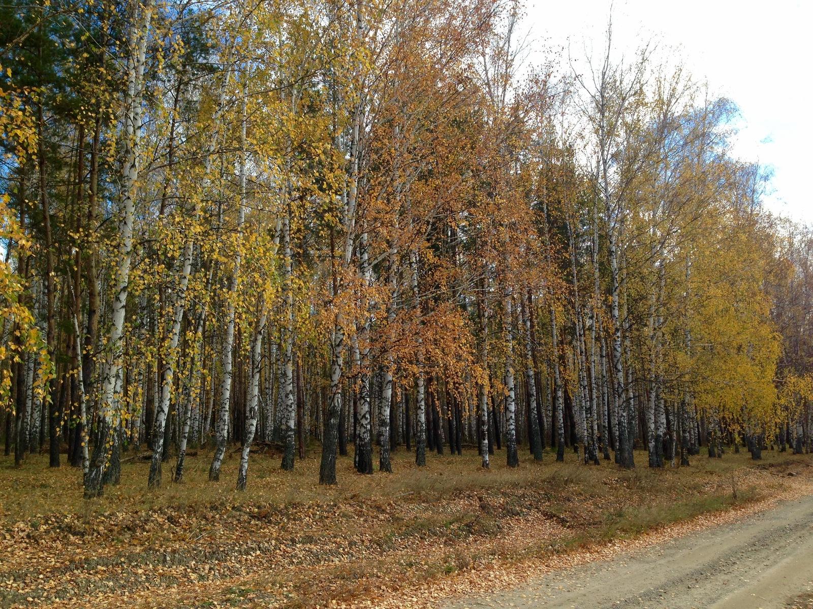 "Результат пошуку зображень за запитом ""ліс восени фото"""