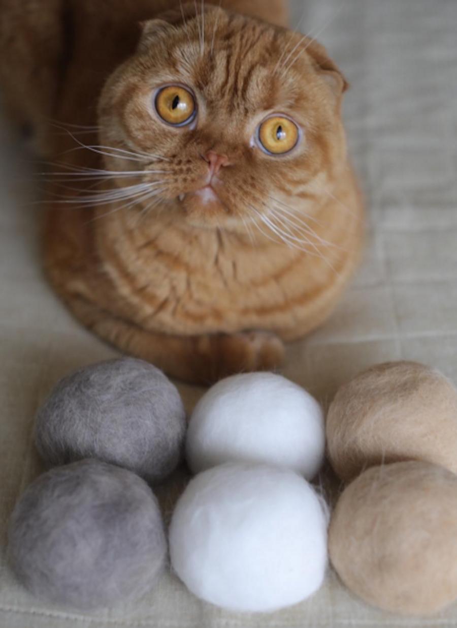 Шерстяные коты