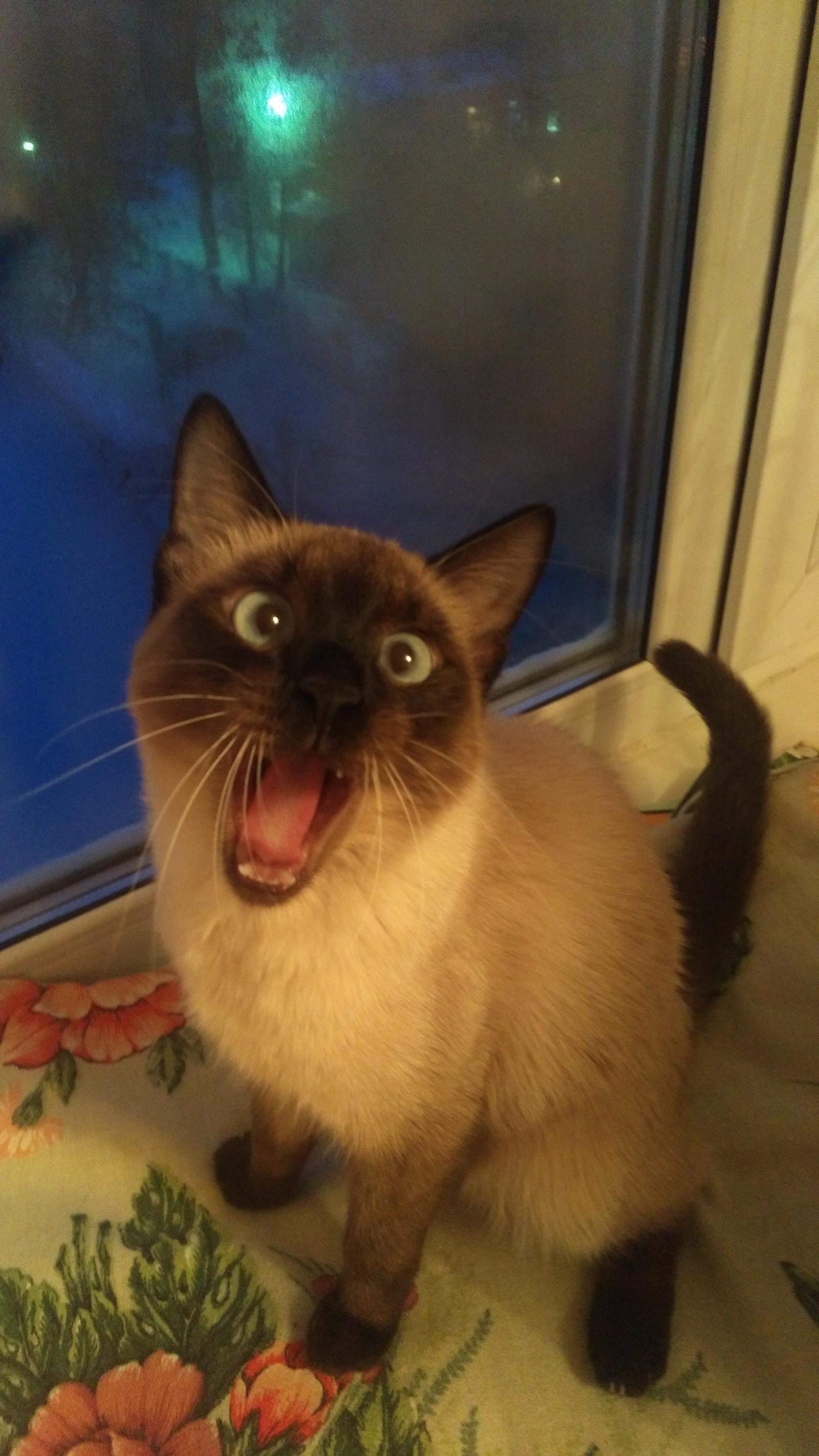 Вконтакте группа кот