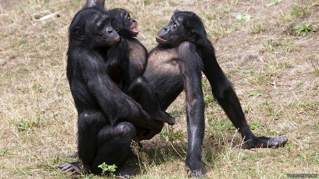 Смотреть сексуальные обезьяны