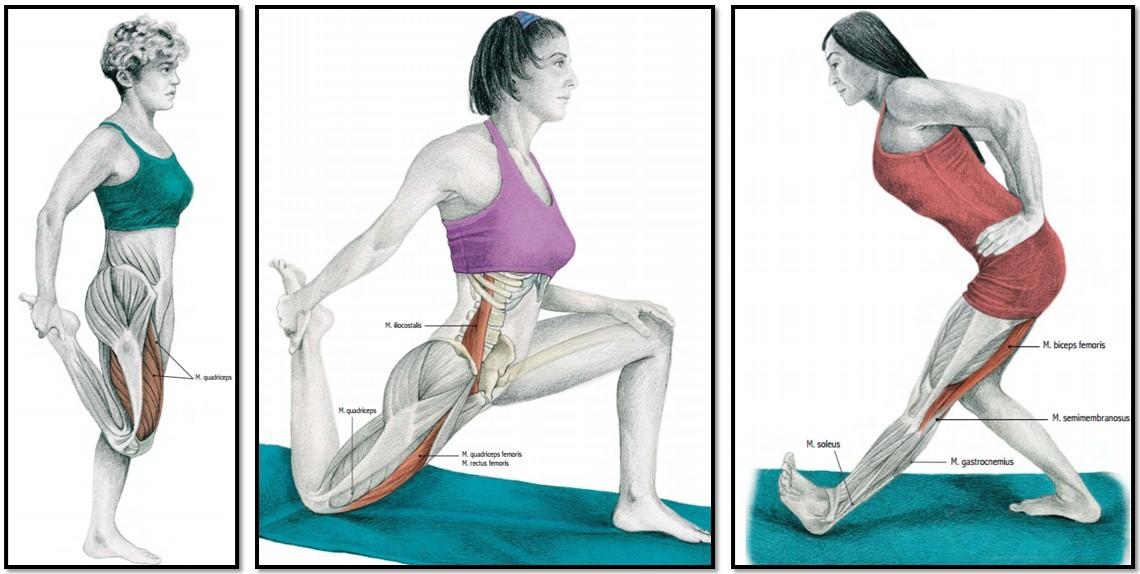 Нужно ли делать упражнения при блоке в коленном суставе лечение суставов в египте