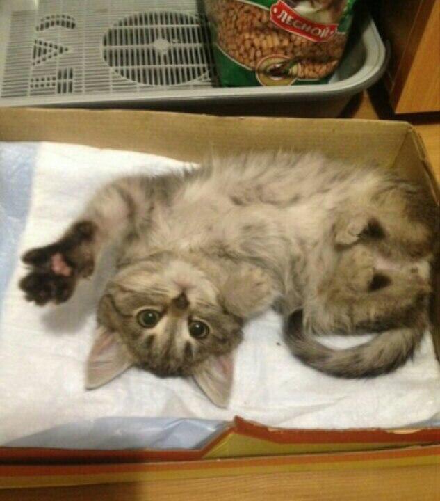 Мороженный кот