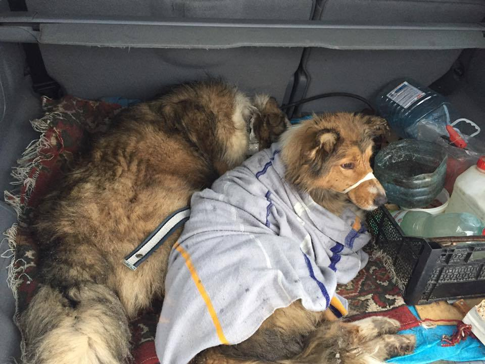 Собачья преданность: трогательные фото животных, помогающих людям картинки