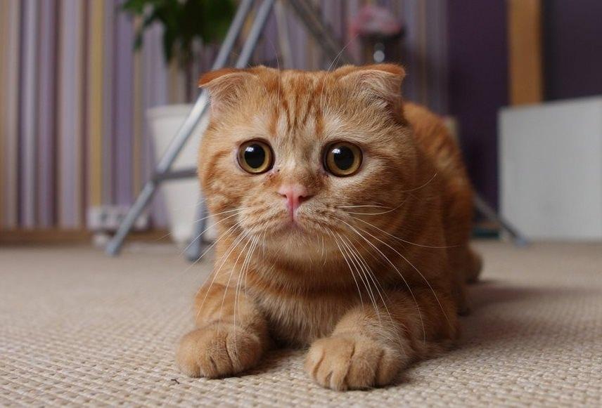 Коты красивые смешные