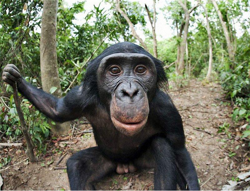 Анимал секс с приматами